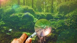 【自由研究】夏休みの宿題としてふさわしい観察や実験は何か?